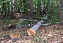 U Mikleuškoj ukradeno 27 stabala u vrijednosti 8700 kn