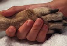 Svjetski dan zaštite životinja – Kutino, osvijesti se !