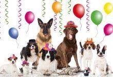FAUN-ovci slave velikih 10 godina – U subotu rođendansko druženje